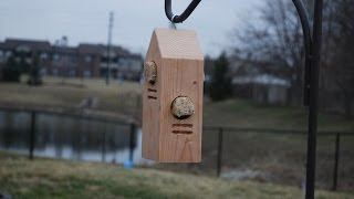 How To Make A Woodpecker Feeder (woodlogger.com)