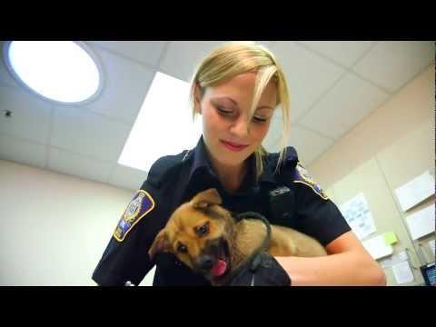 ALES Programs - Animal Health