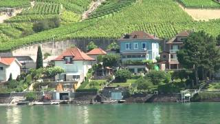 The vineyards of Lavaux to look at from the Lake Geneva