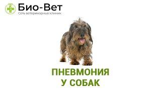Пневмония у собак. Ветеринарная клиника Био-Вет.