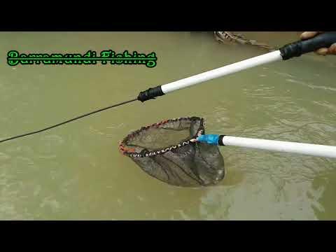 Setrum Ikan Di Sungai Yang Airnya Jernih