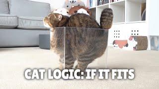 Cat Logic: If It Fits, I Sits