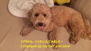 ナナちゃん、イメチェンしてみました! 耳を裏返したら可愛くなったよ!...