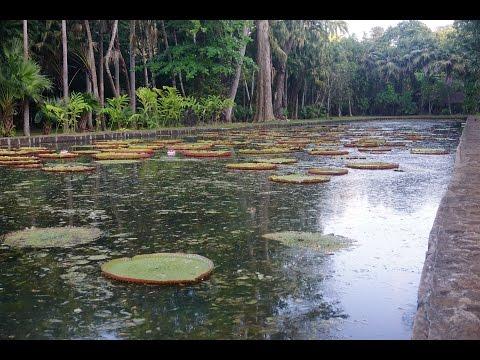 Daily Devotions w/Julie - Mauritius, Africa - Pamplemousses Botanical Garden - 1/28/2017
