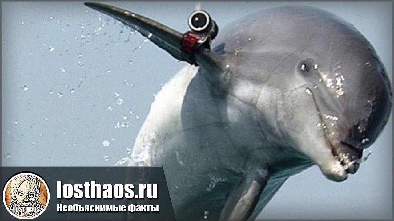 Как в России дельфинов учили защищать Родину