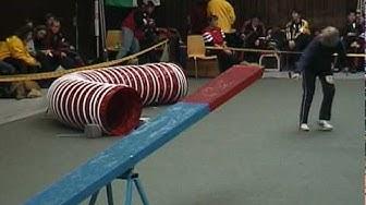 Deutsche Agilitymeisterschaft 2002.avi
