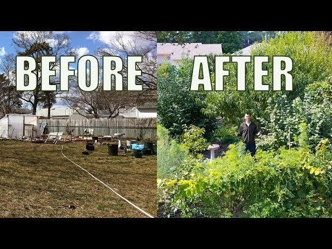 Lawn to FOOD FOREST In 5 Years, Natural Farming Permaculture Gardening