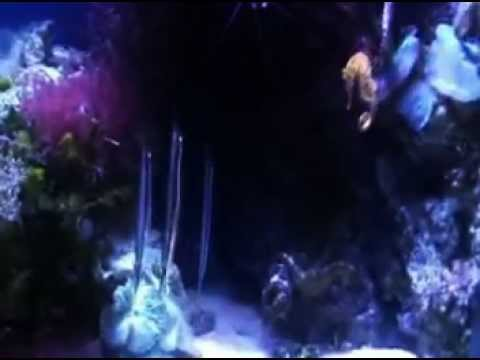 Aquarium of the Pacific - Tropical Pacific Gallery (Part 3)