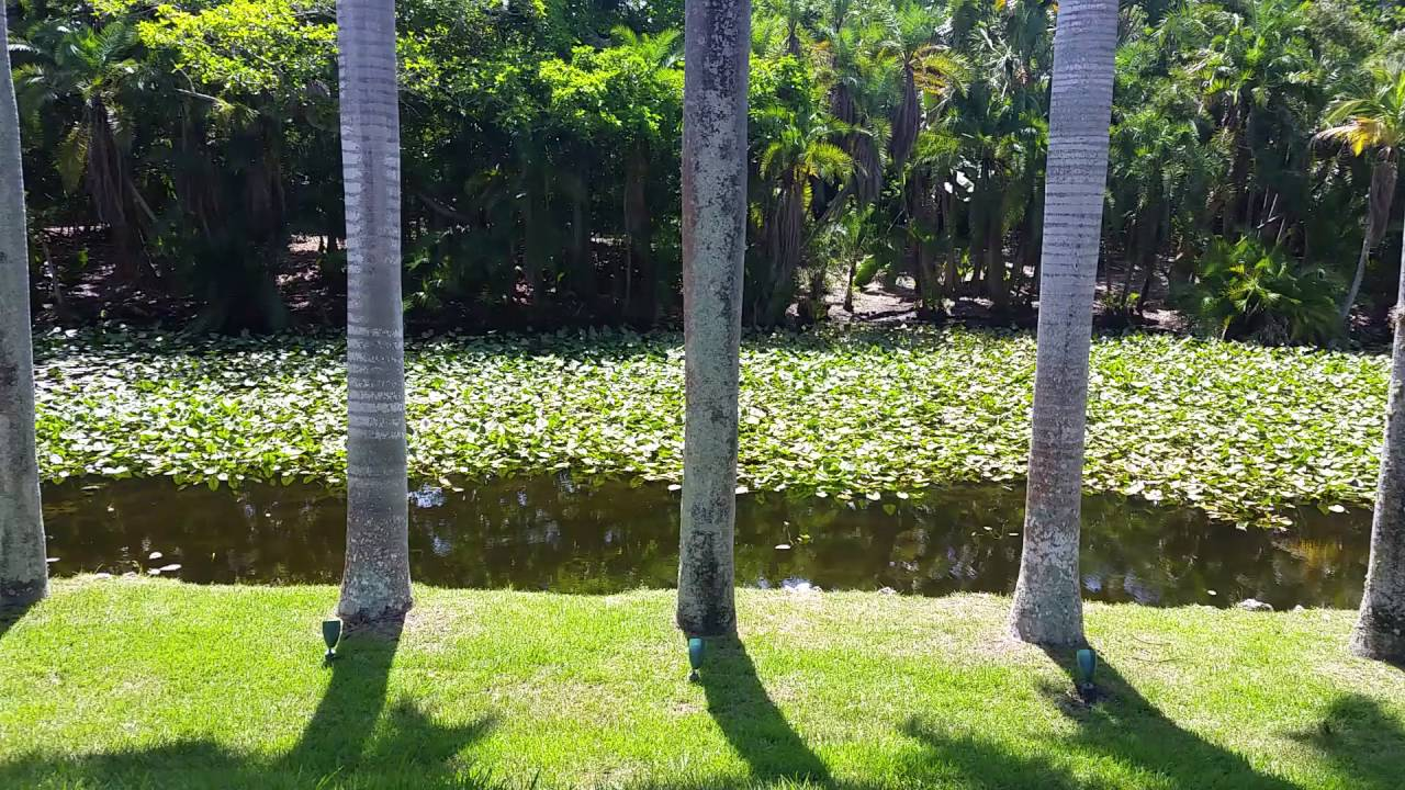 Fort Lauderdale Bonnet house lily pads - YouTube