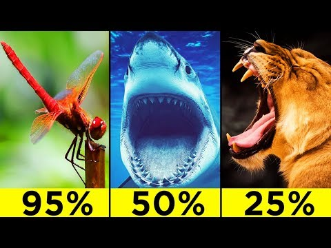 The Most Efficient Predatory Animals In The World