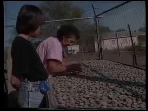 Texas Peyote Dealer