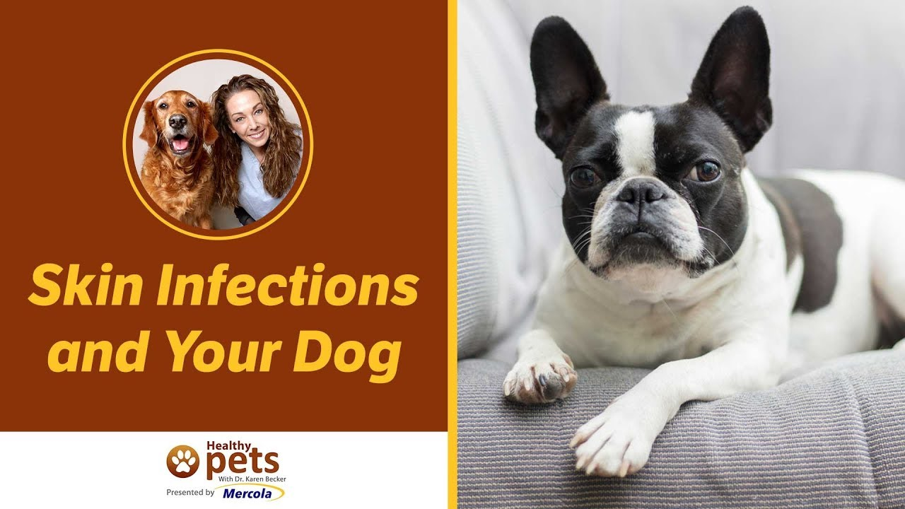 Is Betadine Safe For Dogs? | Pet Recovery Collars™