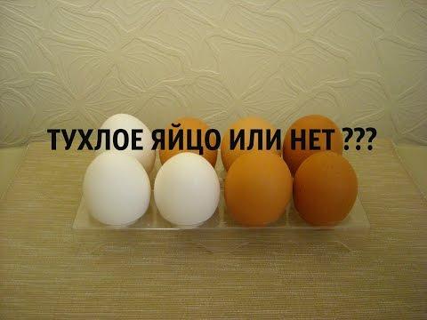КАК ПРОВЕРИТЬ ТУХЛОЕ ЯЙЦО ИЛИ НЕТ 💀🍳👌 Эксперименты дома ➄
