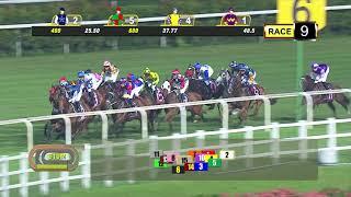 Vidéo de la course PMU PRIX GINGERBREAD MAN 2012 - CLASS 4 (1ER PELOTON)