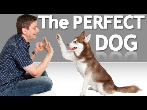 How to Choose the Best Dog for YOU! *NEW*