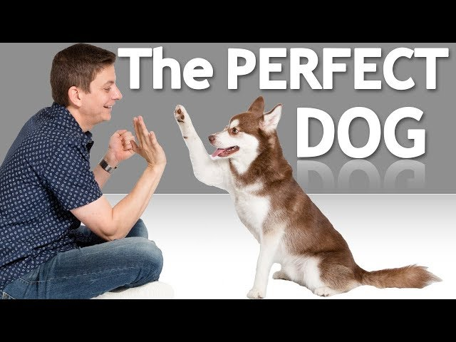 How to Choose the Best Dog for YOU!