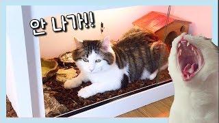 파충류가 된 고양이.. 반항하는 매튜! [집돌이총각]