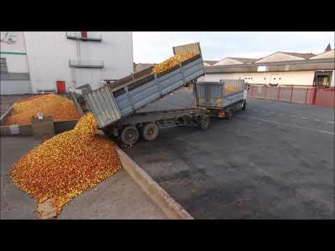 Ramassage des pommes à Cidre 2018
