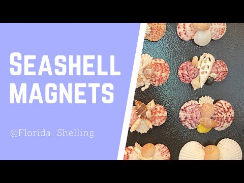 Beginners Guide To Making Seashell Magnets!