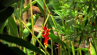 Colors of Hawaii - The Flowers of Hawaii