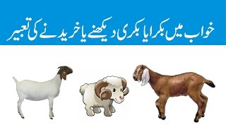 khwab mein bakra ya bakri dekhny ya khreedny ki tabeerसपने में बकरा बकरी देखने या खरीदने की व्याख्या