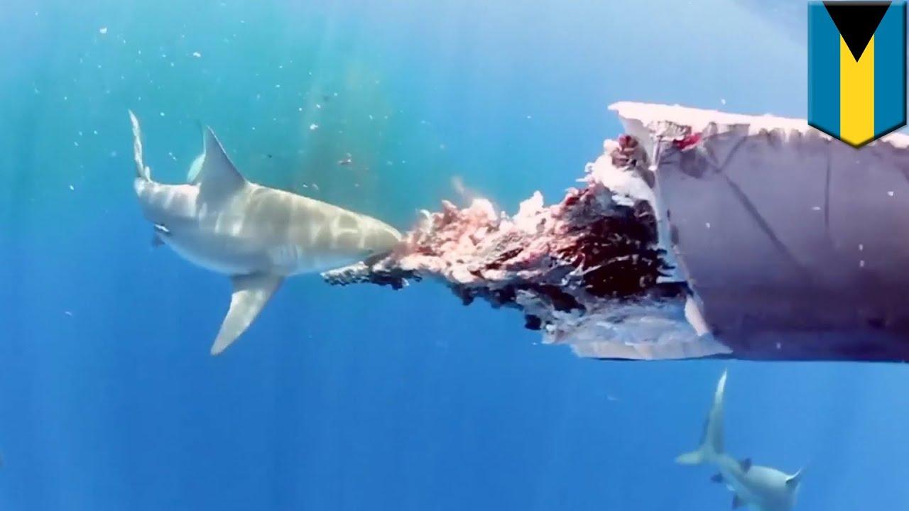 Download 99 Gambar Ikan Video Keren Gratis