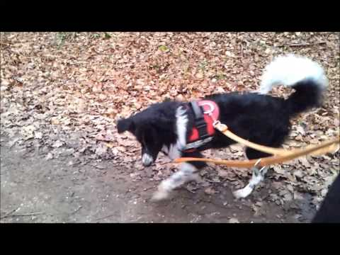 Easy Walk And Gentle Collars For What Kind Of Dogs