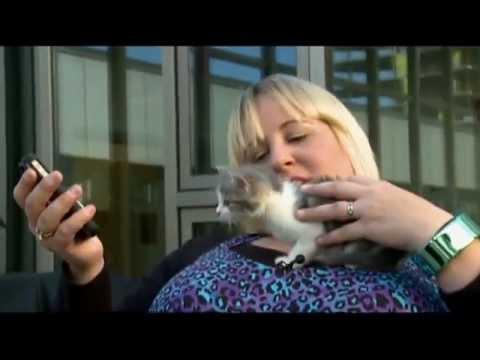 Human To Cat Translator Youtube