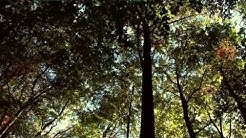 Mythos Wald (Selfmade Naturfilm) [HD]