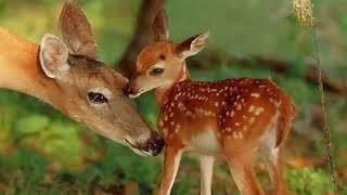 Детёныши животных и их мамы