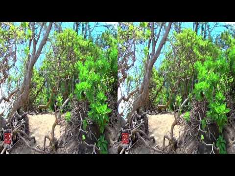 3D Video Hawaii Nature Scene - 3D Video Everyday N°139