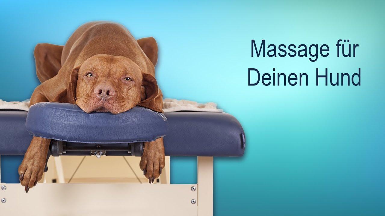 Rückenschmerzen beim Hund – das sind die Anzeichen!