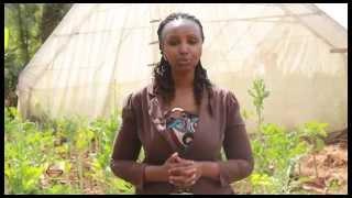 Hela Mchangani: Capsicum Farming.