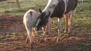 Horse Versus Donkey