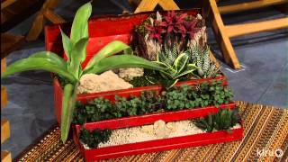 Succulent Container Designs | East Austin Succulents | Central Texas Gardens
