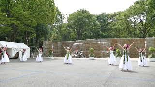 エキシビジョン フラダンスコレクション④/新宿中央公園/第5回 東京舞祭『秋』2018(初日)