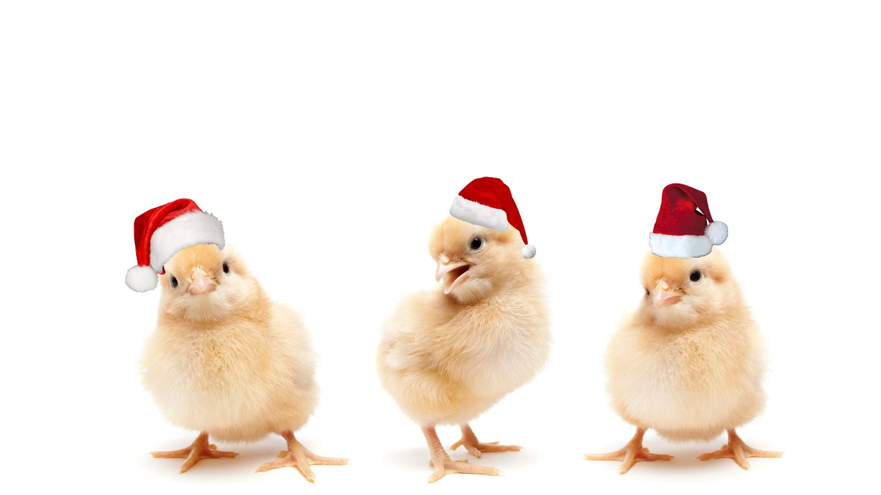 A Chicken\'s Christmas Carol - YouTube