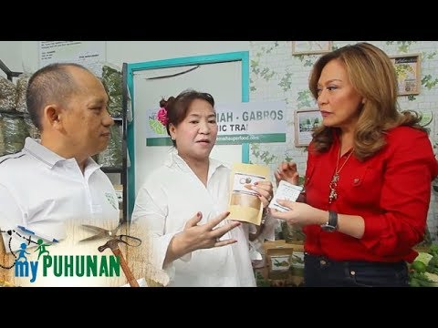 Nehemiah Superfood and Tropical Palm Herb | My Puhunan