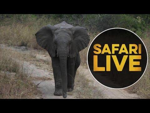 safariLIVE - Sunset Safari - May, 14. 2018