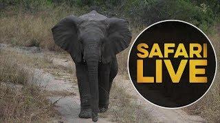 safariLIVE - Sunset Safari - May, 14. 2018 thumbnail