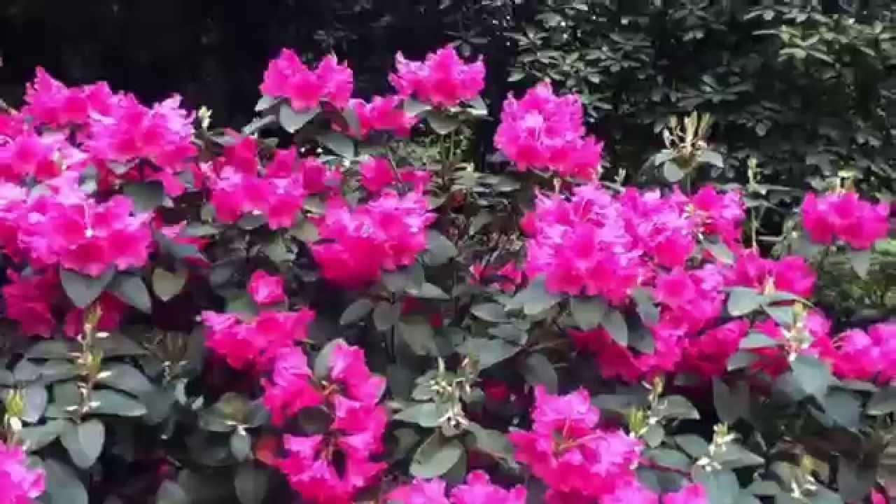 Flores Preciosas, Las Mejores Del Mundo Están En Alemania