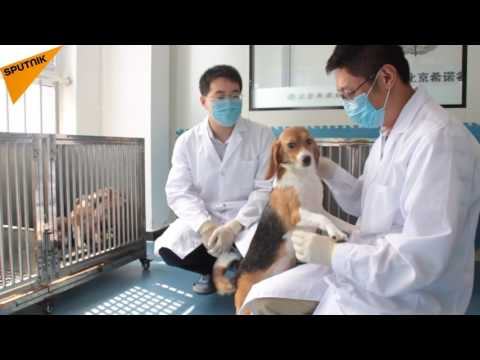 Chinese Scientists Clone World's First Genetically Modified Dog