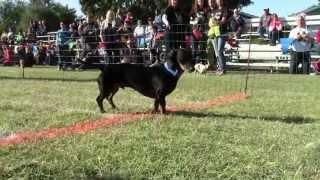 2013 Oktoberfest Wiener Dog Races