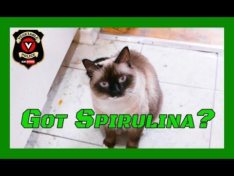 Spirulina Cat