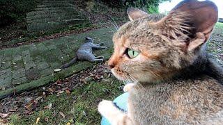 テーブルの上に居た猫をナデナデする所をモノレール猫が遠くから見ていた
