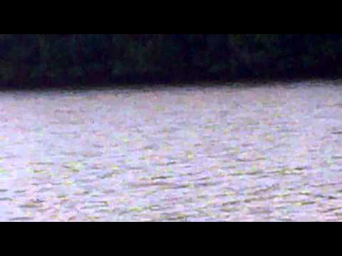 El colorado Sinaloa El robalo pescador.mp4