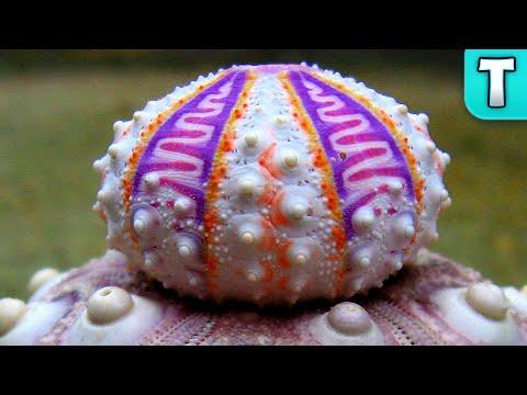 Rare Sea Urchin Discovered On Ebay! | Exquisite Sea Urchin