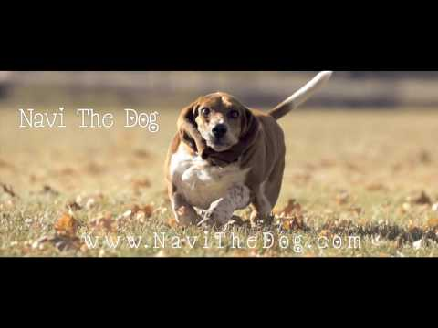 Stop Everything And Watch This Basset Hound Run In Slow Motion