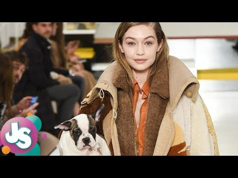 Fans PISSED at Gigi Hadid & Models Using Dogs as Runway Accessories During Fashion Show -JS