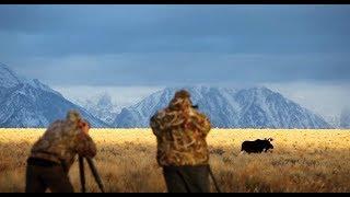 Photographing Wildlife of Grand Teton NP - Wild Photo Adventures